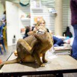 6 лучших кафе с кошками Москвы!