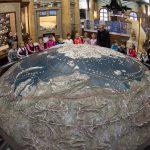 20 самых важных фактов про питерский музей Арктики и Антарктики!